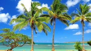 palm-tree beaches